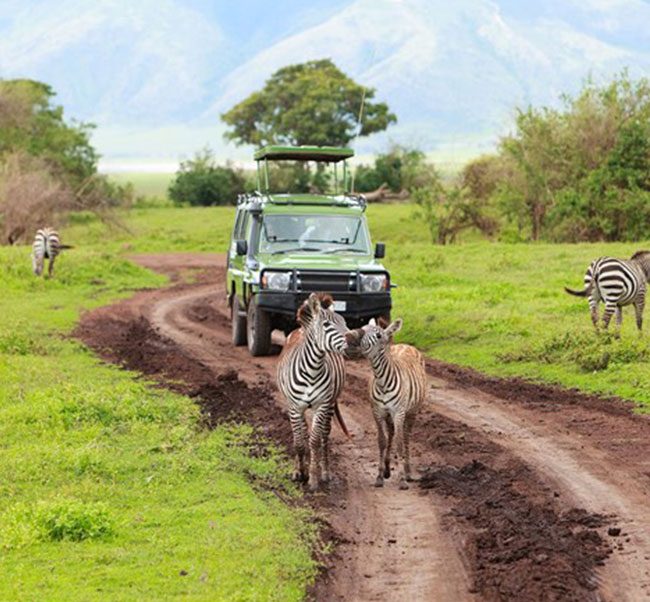 Africa Vacations: Focus South Africa