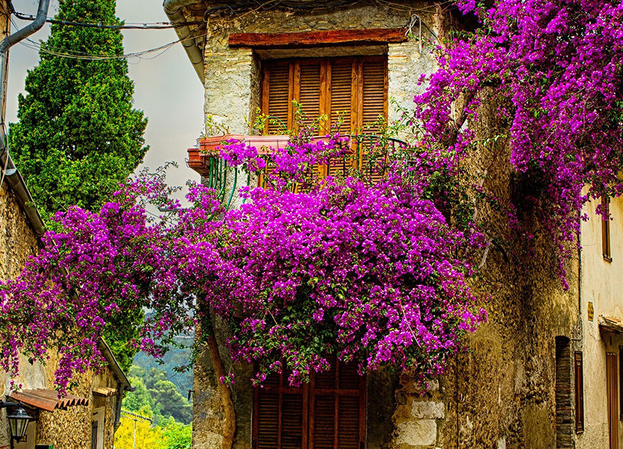 Colors Of Provence 2022